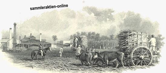 South Puerto Rico Sugar Company