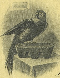 Parrot Silver and Copper Company